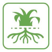 Plant drought-resistant lawns